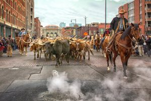 National Western Stockshow Denver